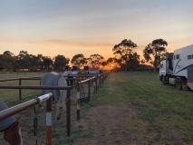 Werken met paarden in Australië