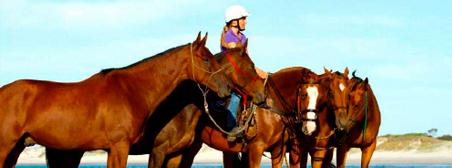 paarden australie